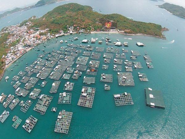 Hon Mieu Island Nha Trang