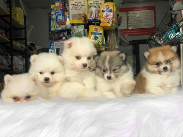Pet Shops In Nha Trang